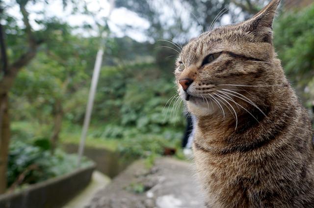 猫でゆっくり癒される